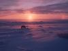 Polar bear on the Arctic tundra